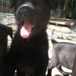 Nara 71913 pup